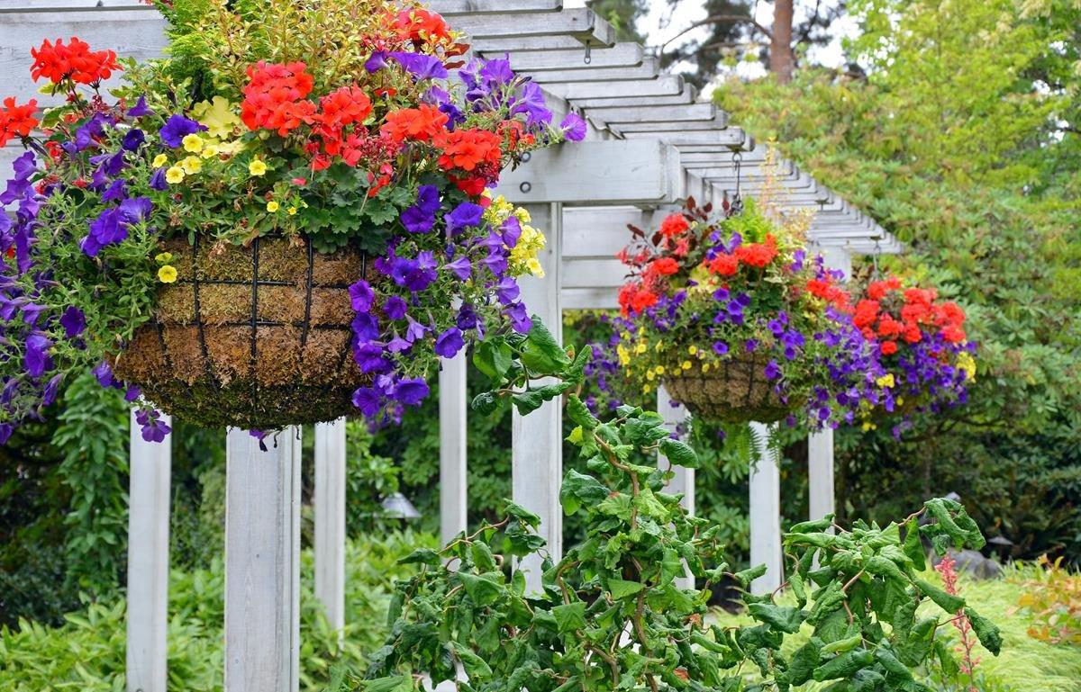 Hanging Baskets & Pots
