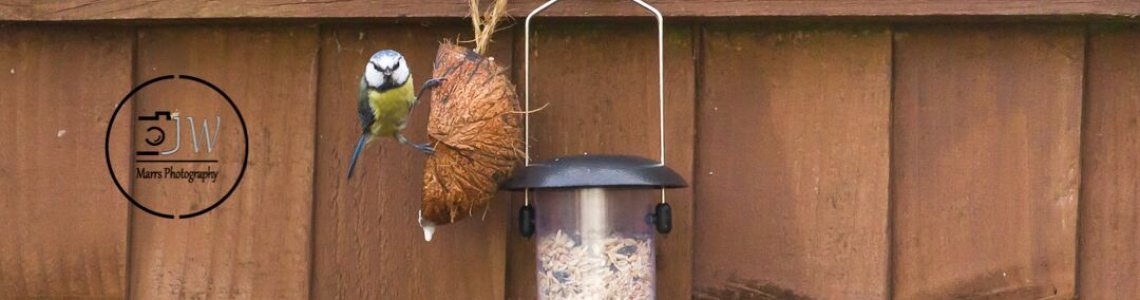 bird feeding 2